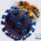 نقش نیش زنبور در پیشگیری و درمان کرونا